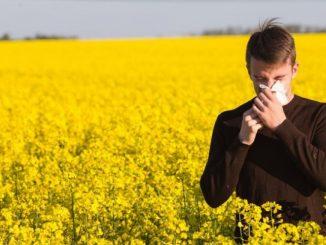 Allergies au pollens